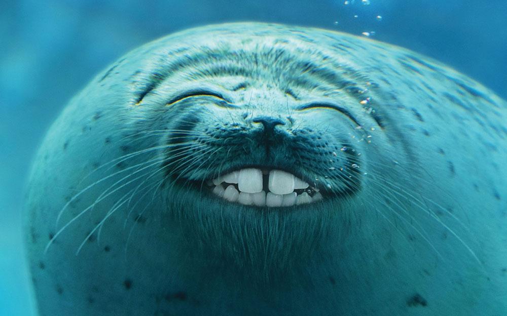 Colgate — Smiling Fish